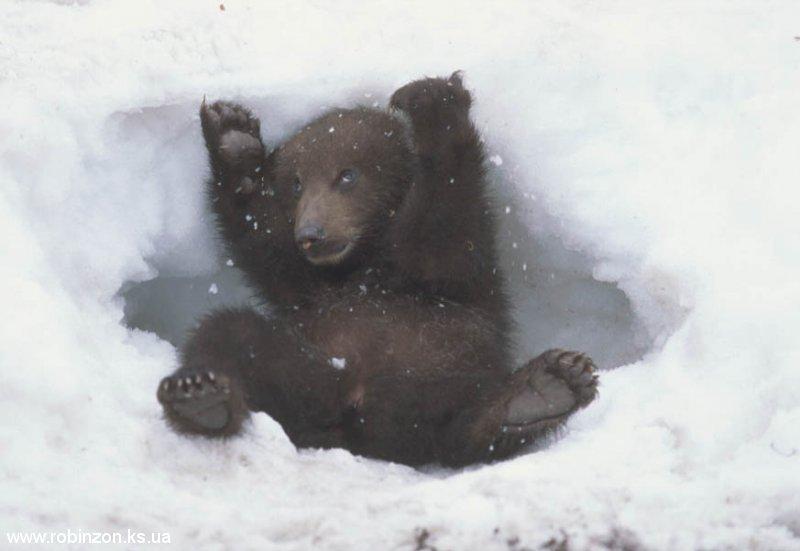 Medvedi_005