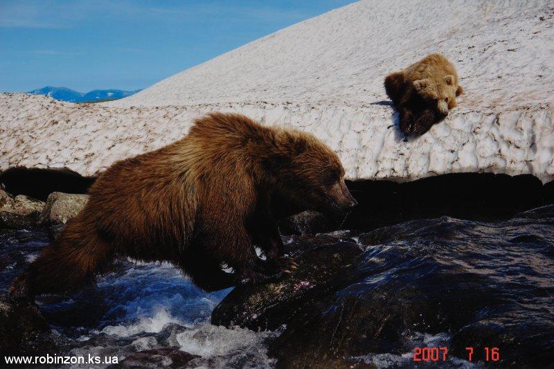 Medvedi_023