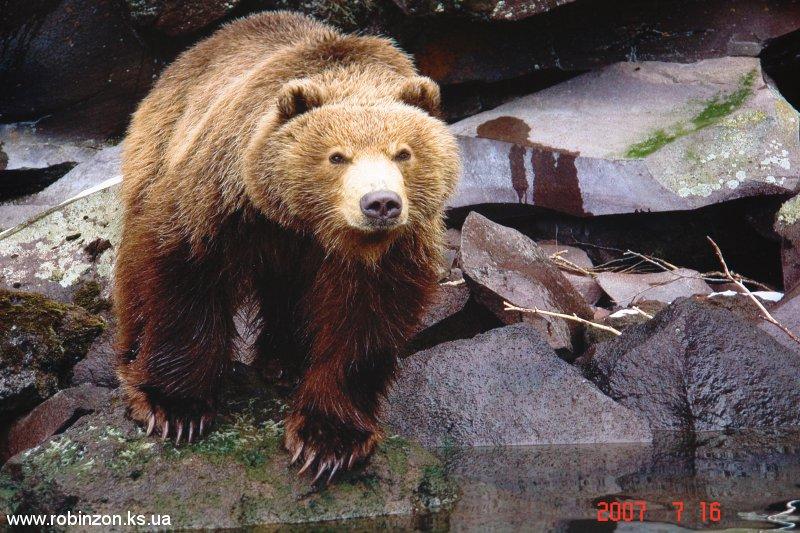 Medvedi_025