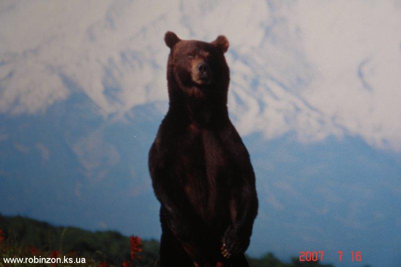 Medvedi_027