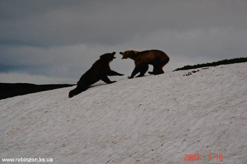 Medvedi_034