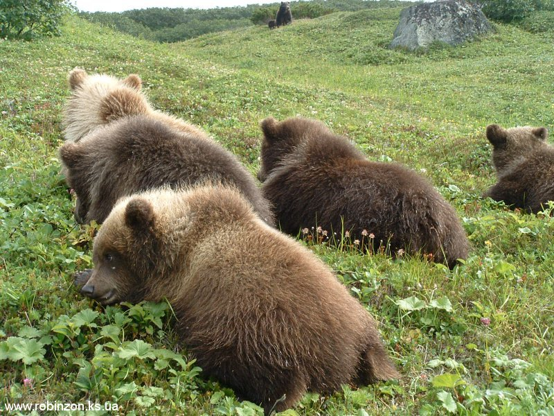 Medvedi_049