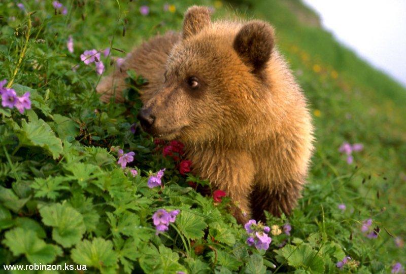 Medvedi_051