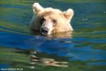 Medvedi_004