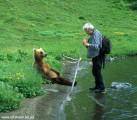 Medvedi_009