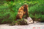 Medvedi_024