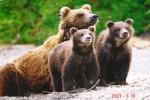 Medvedi_030