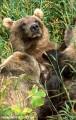 Medvedi_040