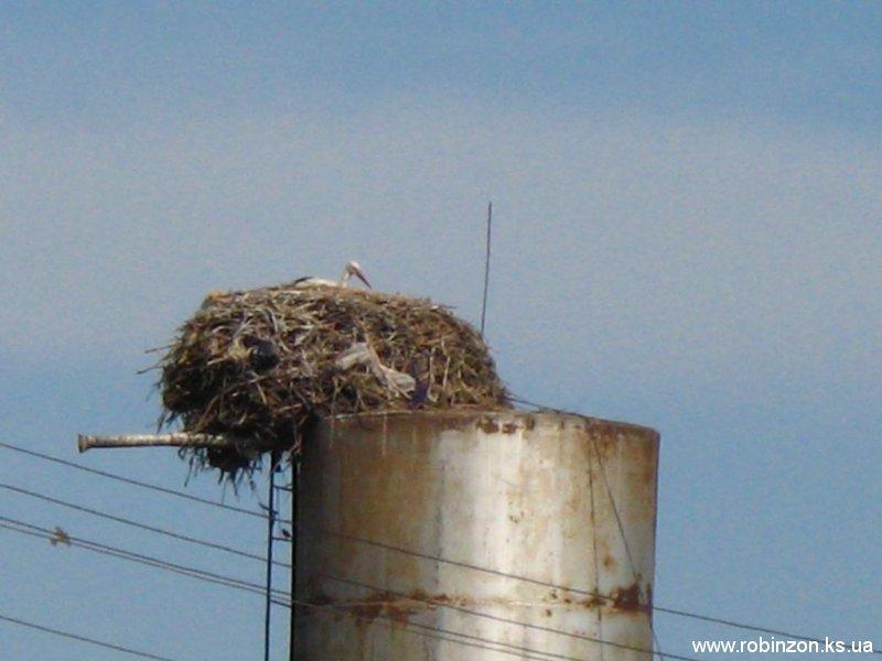 Такое гнездо