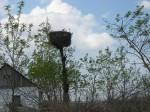 Гнездо на высоте