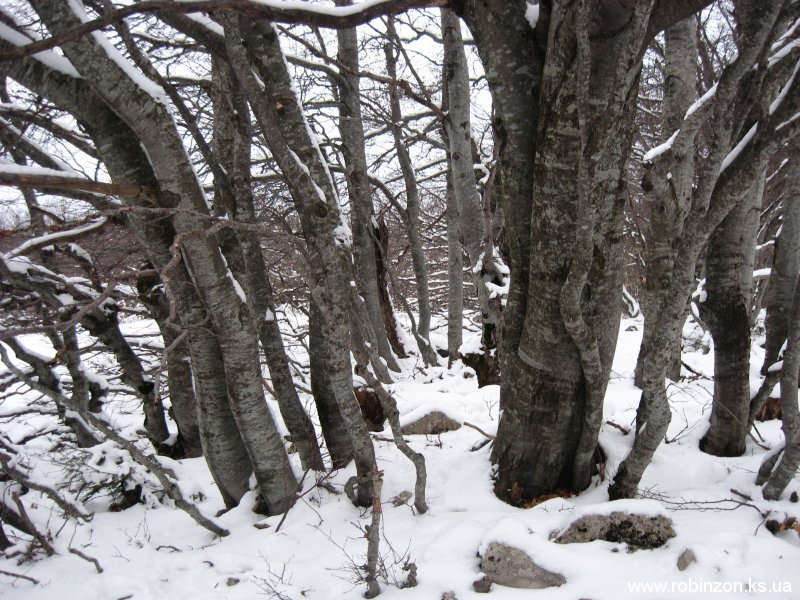 Среди деревьев было хорошо и тихо