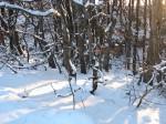 Тишина стояла снежная, но позже оказалось, что температура -10