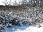 Снег - как комочки ваты на ветвях