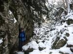 Тисы окутаны плотным снегом