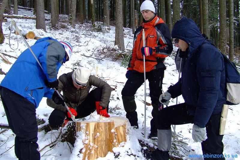 Считаем годичные кольца у спиленного дерева, 31 января 2010