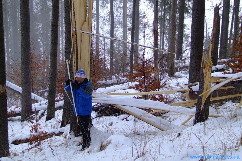 Поваленное смерчем дерево, 31 января 2010