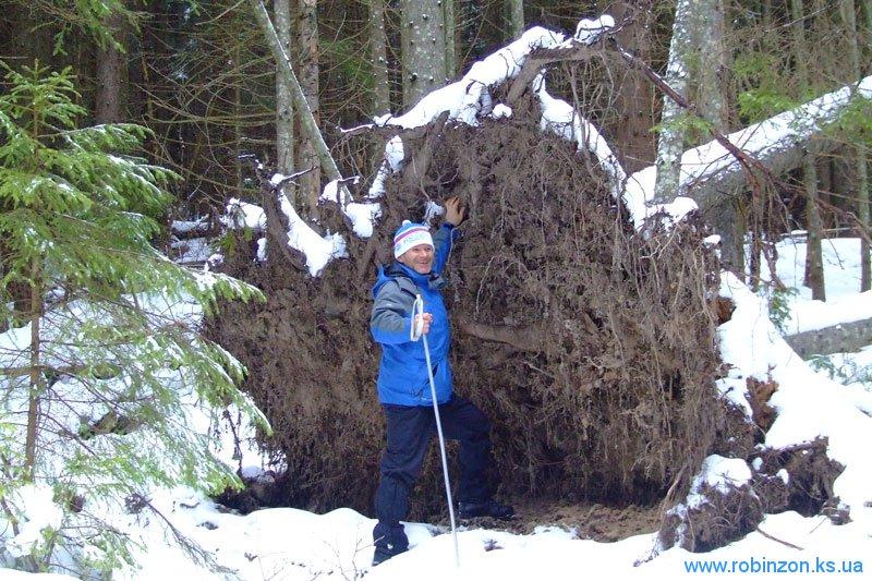 Николай Иванович у поваленного дерева, 31 января 2010