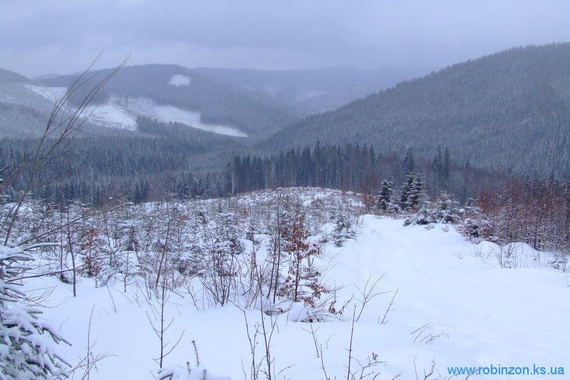 Молодой карпатский лес, 1 февраля 2010