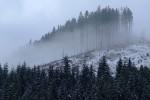 Лес в тумане, 31 января 2010