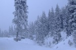 Карпатская зима, 1 февраля 2010