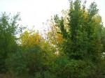 Осень в Никольском
