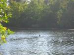 Первый заплывальщик сообщил, что вода тёплая